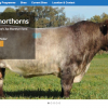 Longview Shorthorns